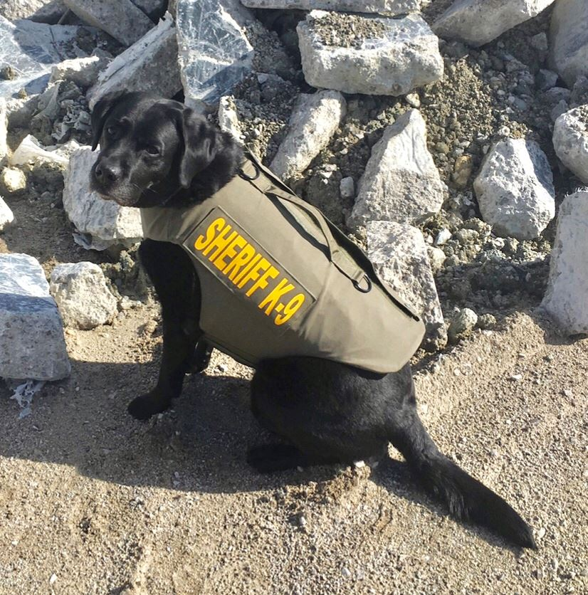 Shadow with New K-9 Vest 2019